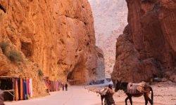 Todra gorges during desert tour