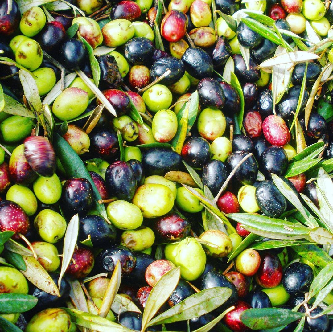 Moulay Idriss olives