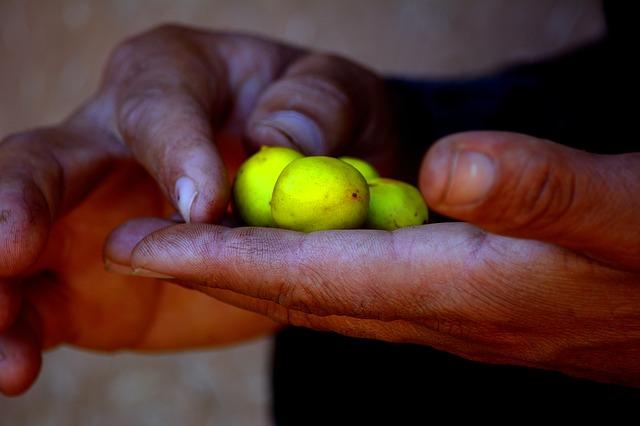 women cooperatives Morocco