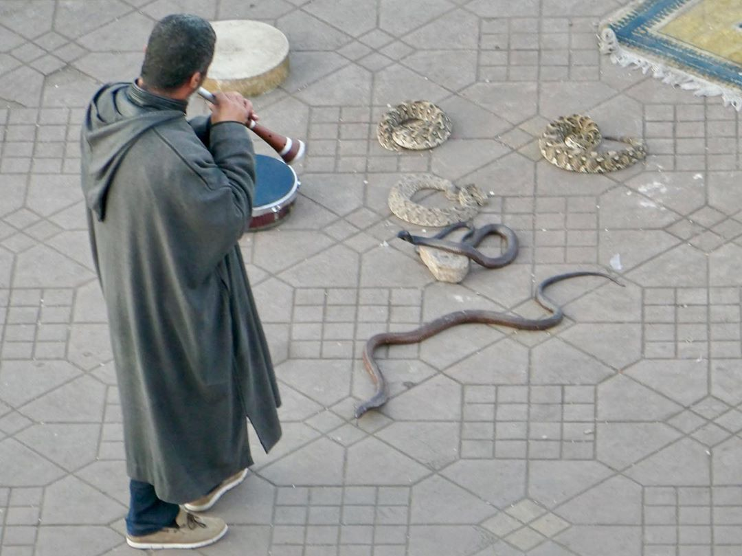 Jemaa el fna snakes