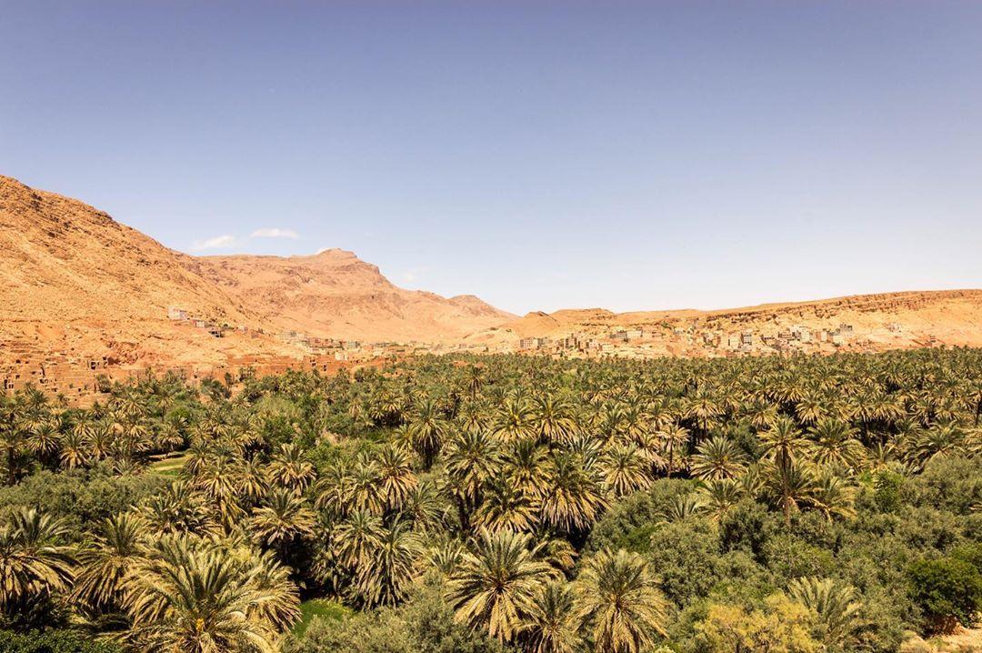 Todra Gorges Oasis
